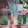 potted_plants_20