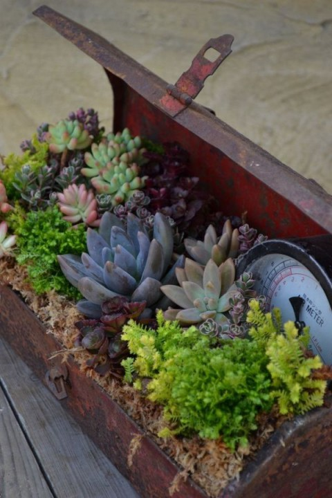 succulent_decor_02