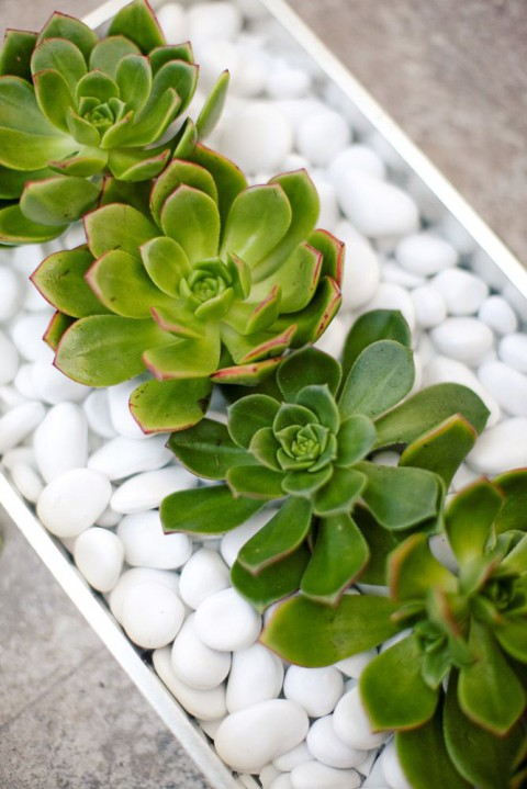 succulent_decor_07