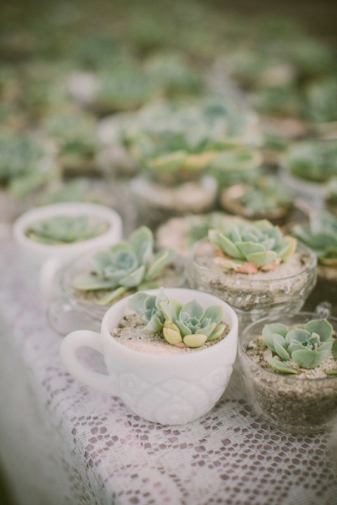 succulent_decor_09