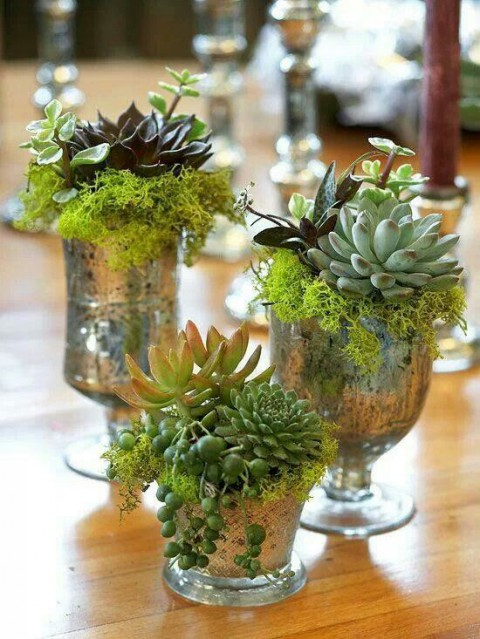 succulent_decor_14