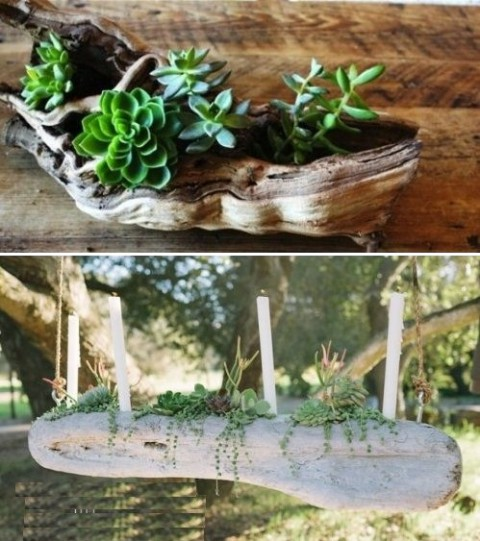 succulent_decor_15