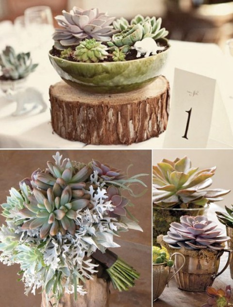 67 Succulent Wedding Decor Ideas HappyWeddcom : succulentdecor32 480x632 from happywedd.com size 480 x 632 jpeg 85kB