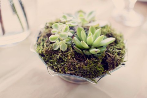 succulent_decor_45