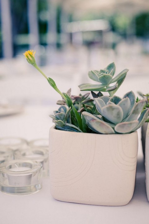 succulent_decor_47