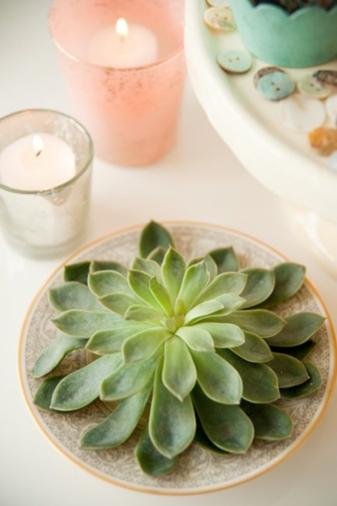 succulent_decor_53