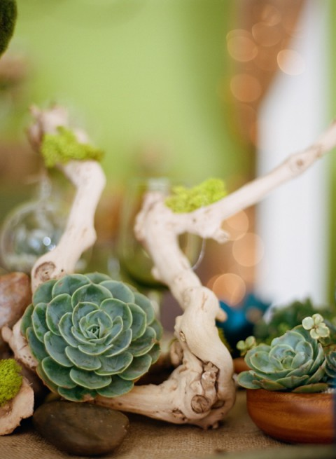 succulent_decor_55