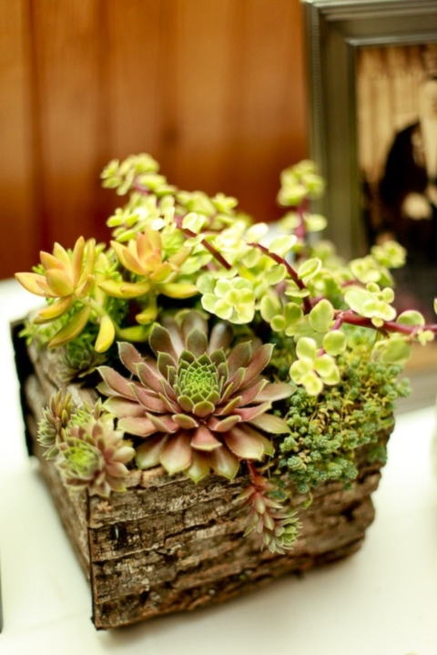 succulent_decor_57