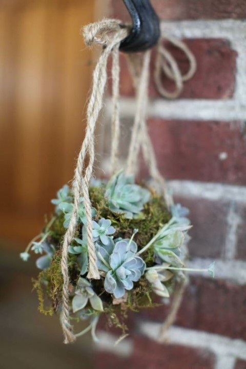 succulent_decor_59