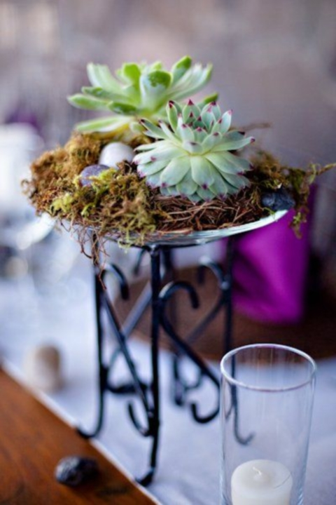 succulent_decor_62