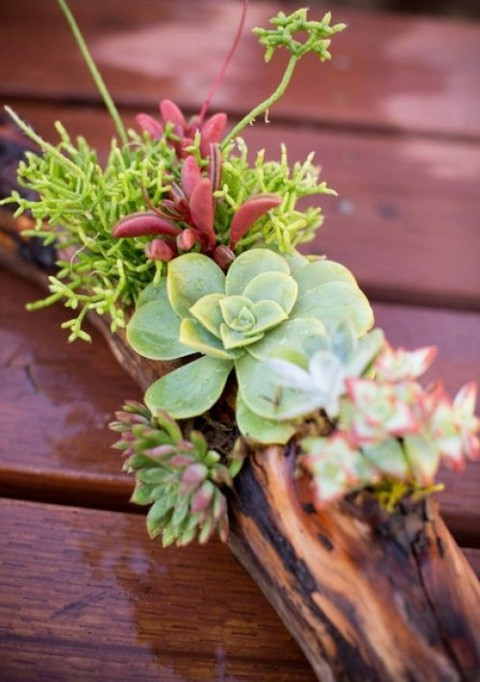 succulent_decor_65