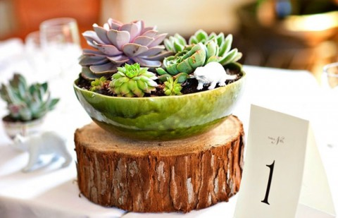 succulent_decor_67