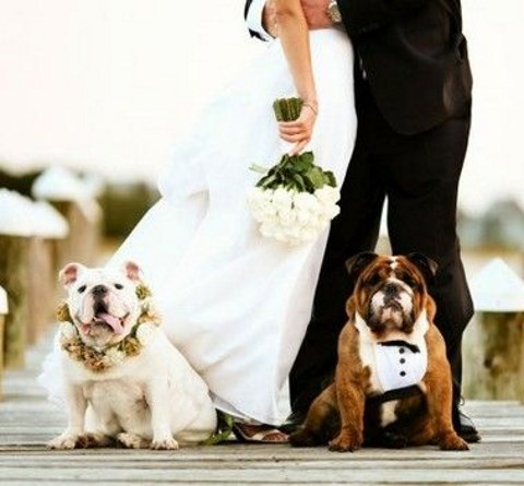 Pets At Weddings: 63 Cutie Ideas