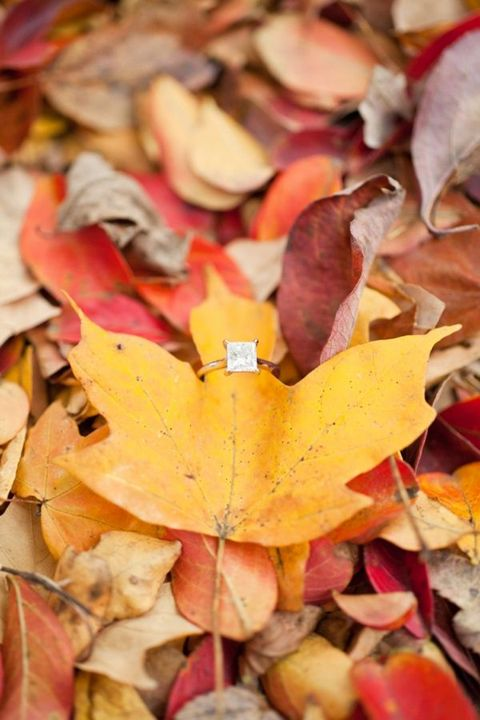 fall_engagement_07