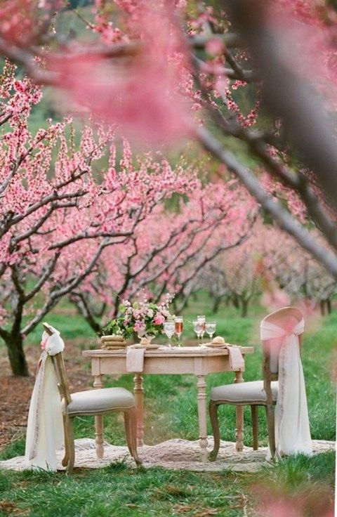 blooming_orchard_wedding_19