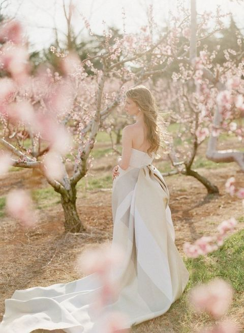 blooming_orchard_wedding_25