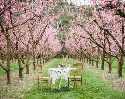 blooming_orchard_wedding_42
