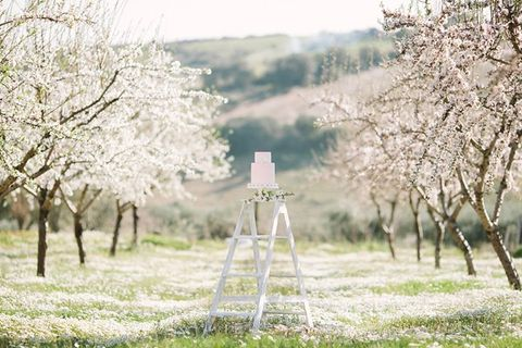 blooming_orchard_wedding_54