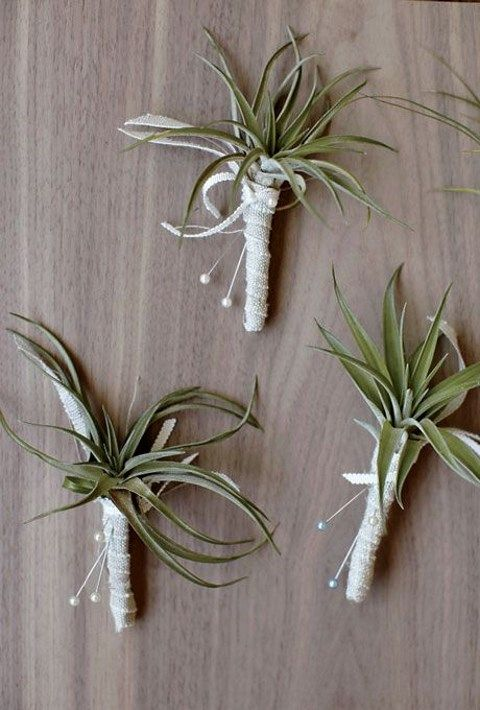 airplant_08