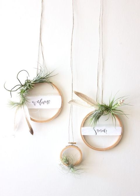 airplant_16