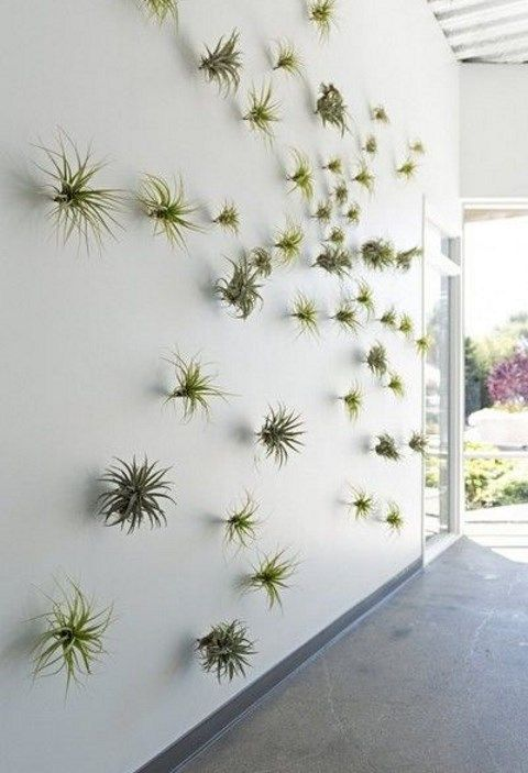 airplant_22