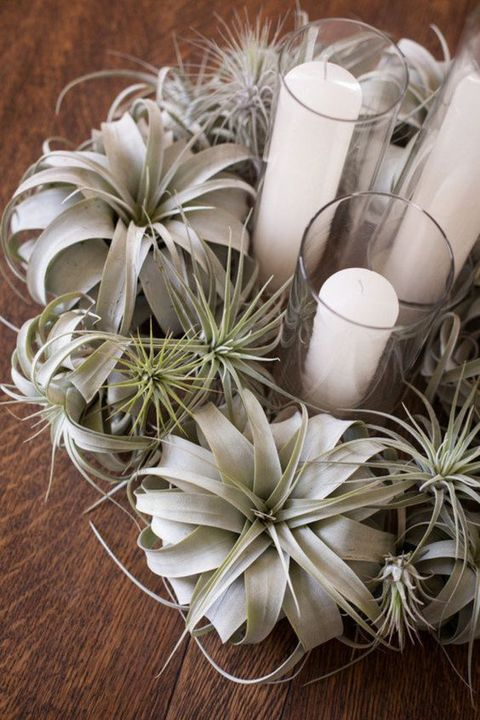 airplant_27
