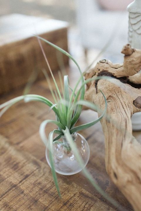 airplant_28