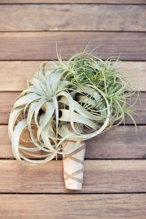 airplant_43