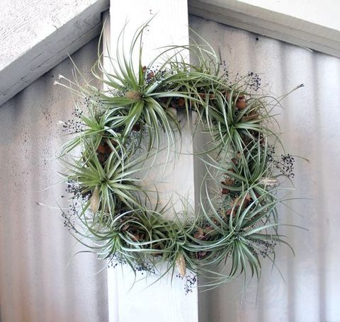 airplant_61