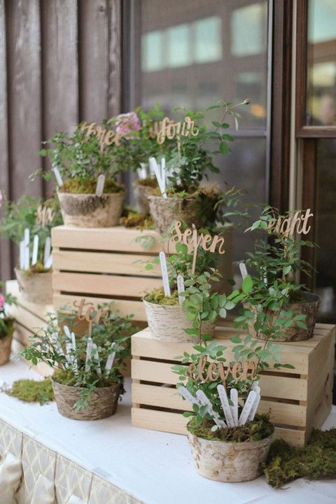 potted_plants_12