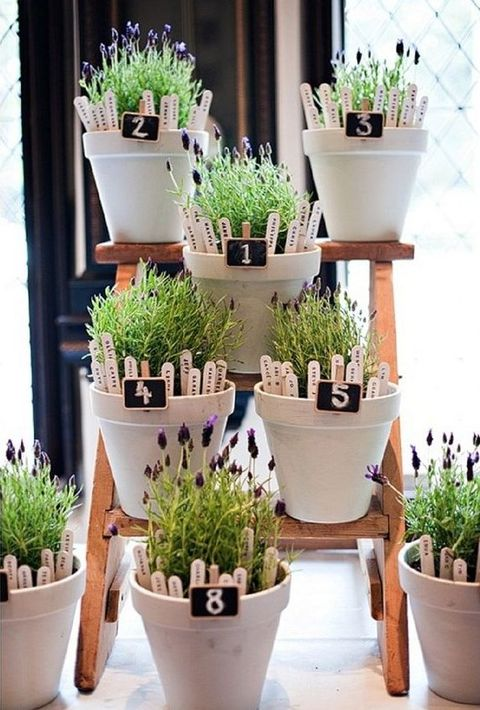 potted_plants_16