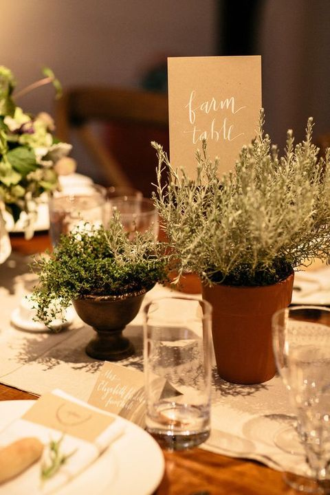 Cutest potted plants ideas for your wedding happywedd
