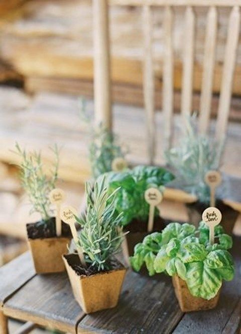 potted_plants_49