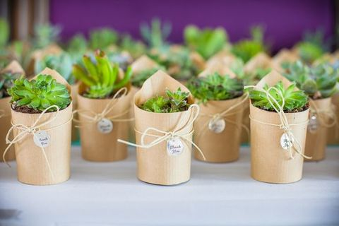 potted_plants_53