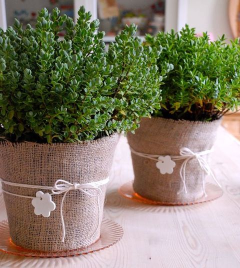 potted_plants_54