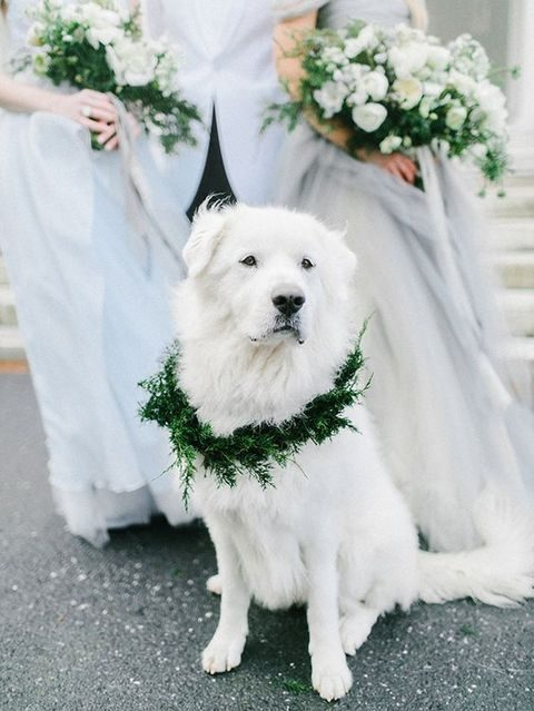 evegreen dog wedding wreath