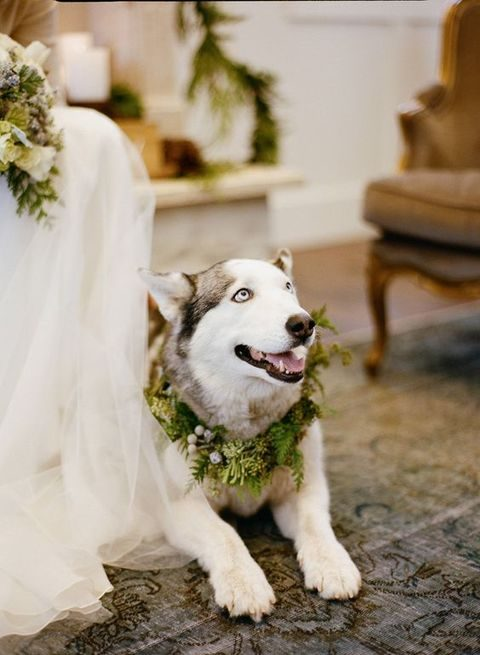 evergreen wedding wreath for huskies