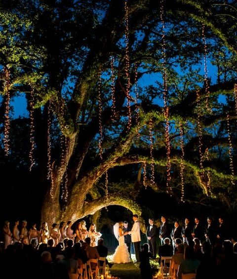 giant old moss-covered tree with lights hanging for the ceremony