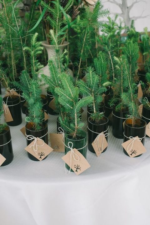 little potted fir trees as wedding favors