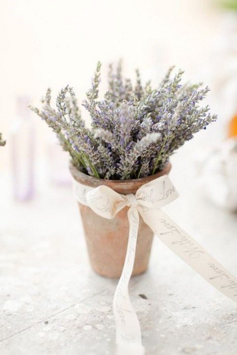 40 romantic lavender wedding ideas - Growing lavender pot ...