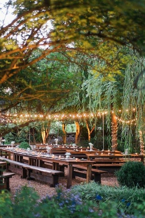 light strings over the reception and covering the trees around