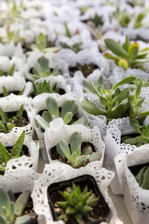 succulent wedding favors covered with paper doilies