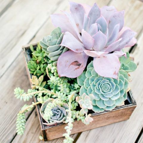 a box with different succulents in green and lilac