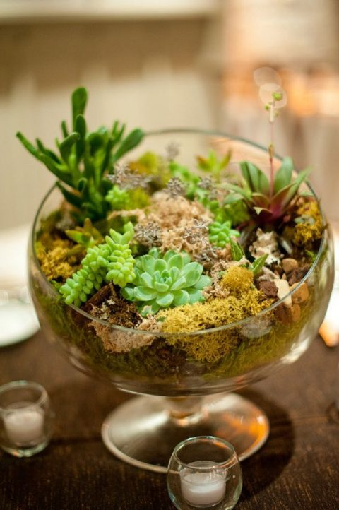 a bowl with moss and succulents