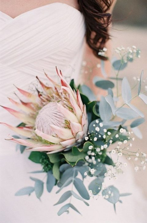 a simple modern bouquet with a king protea, baby_s breath and eucalyptus